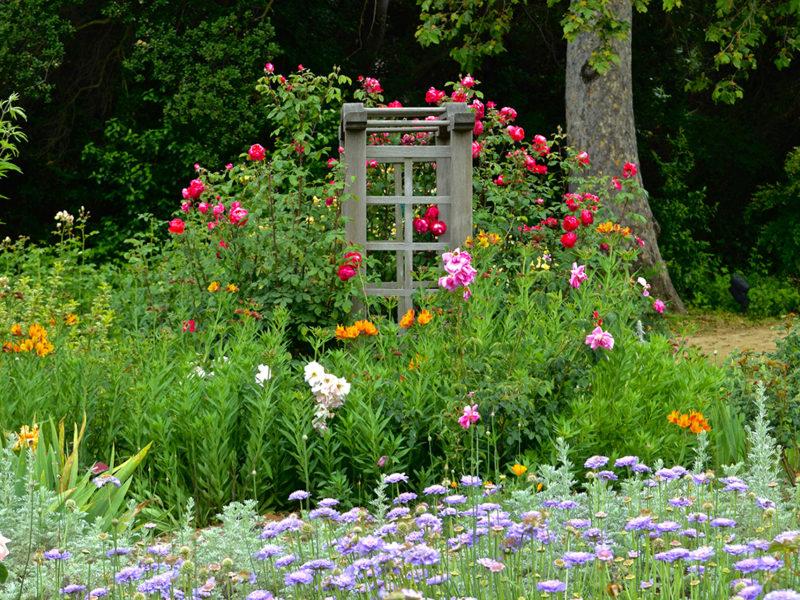 flowers against trellis at Descanso Gardens in La Cañada Flintridge, California
