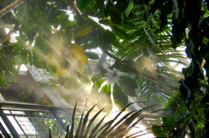 water mist in the conservatory of The United States Botanic Garden in Washington, D.C.