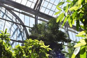 the conservatory of The United States Botanic Garden in Washington, D.C.