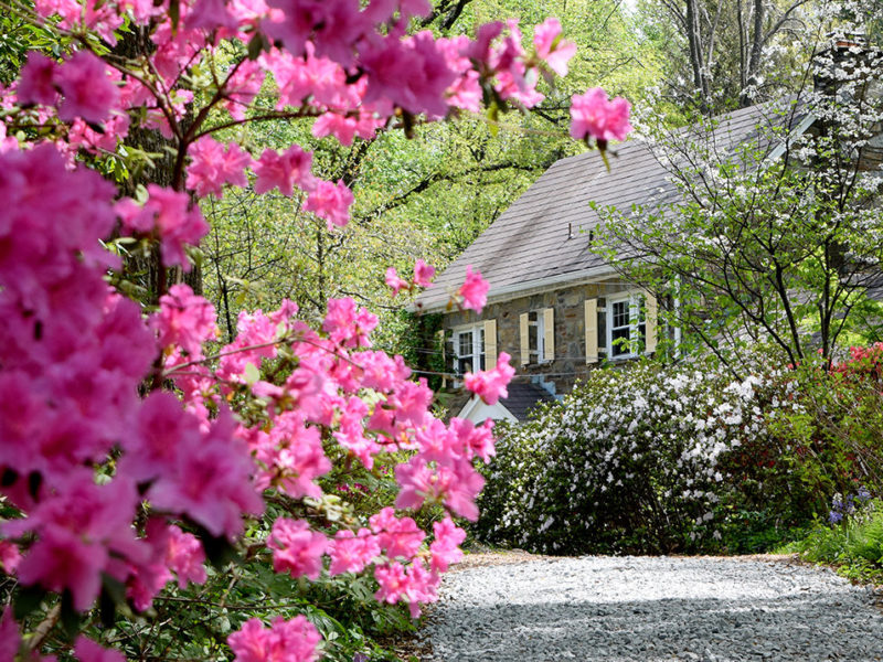 azaleas and stone manor house at McCrillis Gardens in Bethesda, Maryland