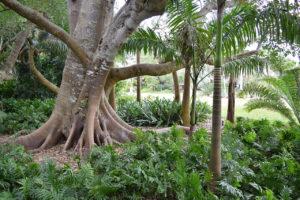 trees at Marie Selby Botanical Gardens in Sarasota, Florida.