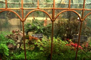 terrarium in The United States Botanic Garden in Washington, D.C.