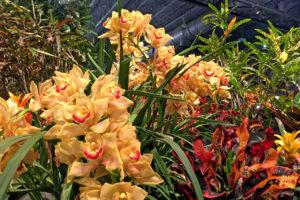 orchids display at The Philadelphia Flower Show in Philadelphia, Pennsylvania