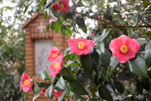 camellia flowers and station of the cross at the Franciscan Monastery in Washington, D.C.