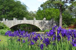 irises and bridge at Norfolk Botanical Garden in Norfolk, Virginia