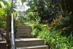 Mildred E. Mathias Botanical Garden in Los Angeles, California