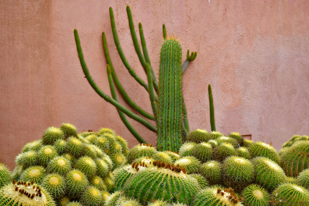 cactus against pink wall at Ganna Walska Lotusland in Santa Barbara, California