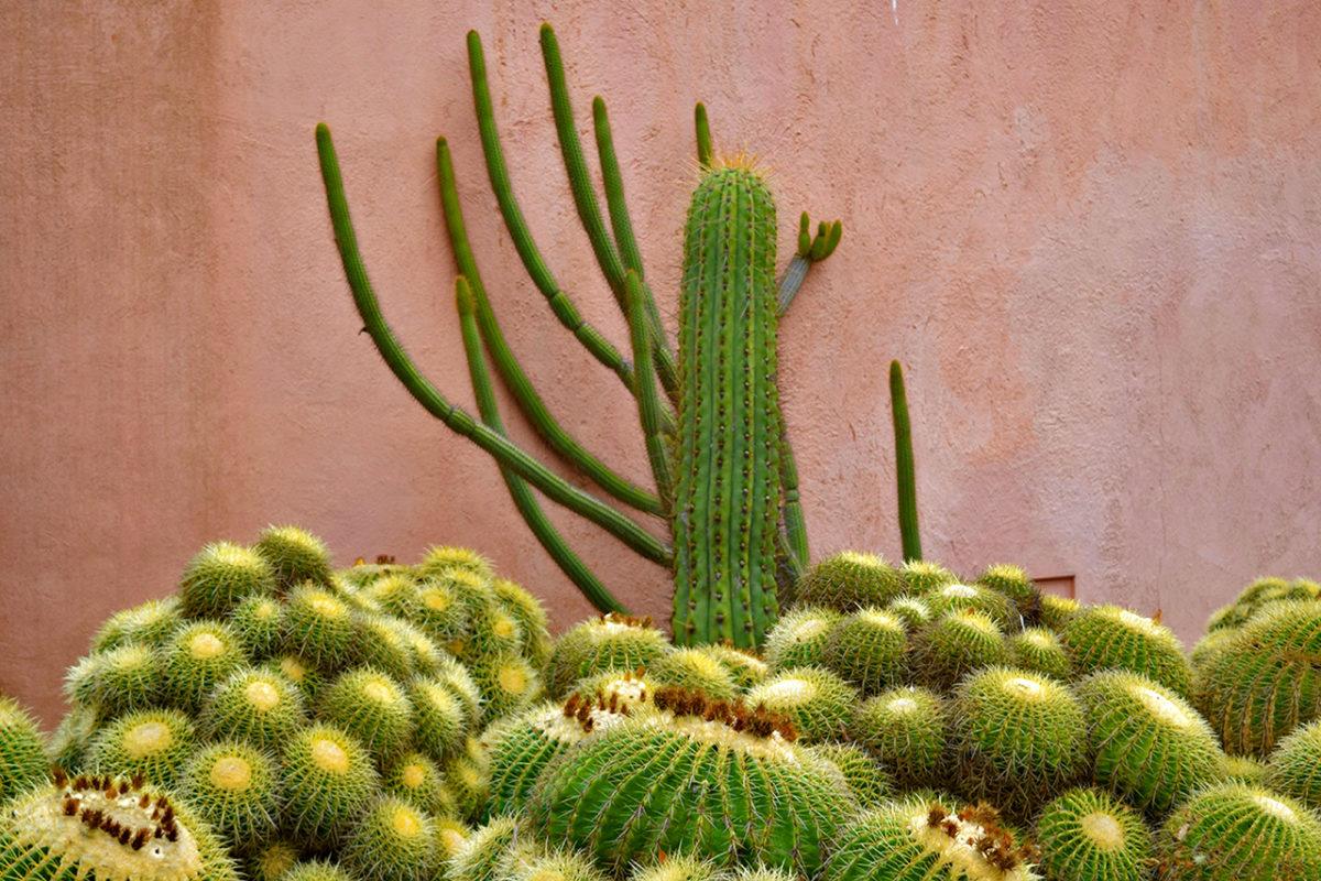 cactus against pink wall at Ganna Walska Lotusland in Santa Barbara, California