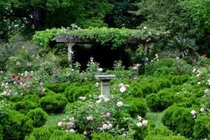 rose garden at Tudor PlaceHistoric House & Garden in Washington, DC