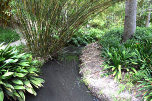 stream at the Mildred E. Mathias Botanical Garden in Los Angeles, California