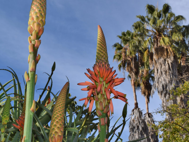 South Coast Botanic Garden in Palos Verdes, California