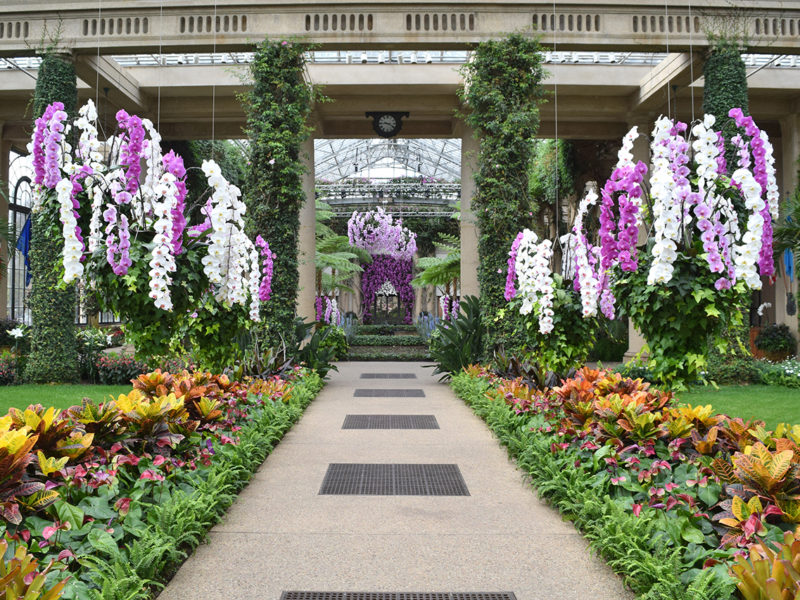 Orchid show in the conservatory of Longwood Gardens in Kennett Square, Pennsylvania