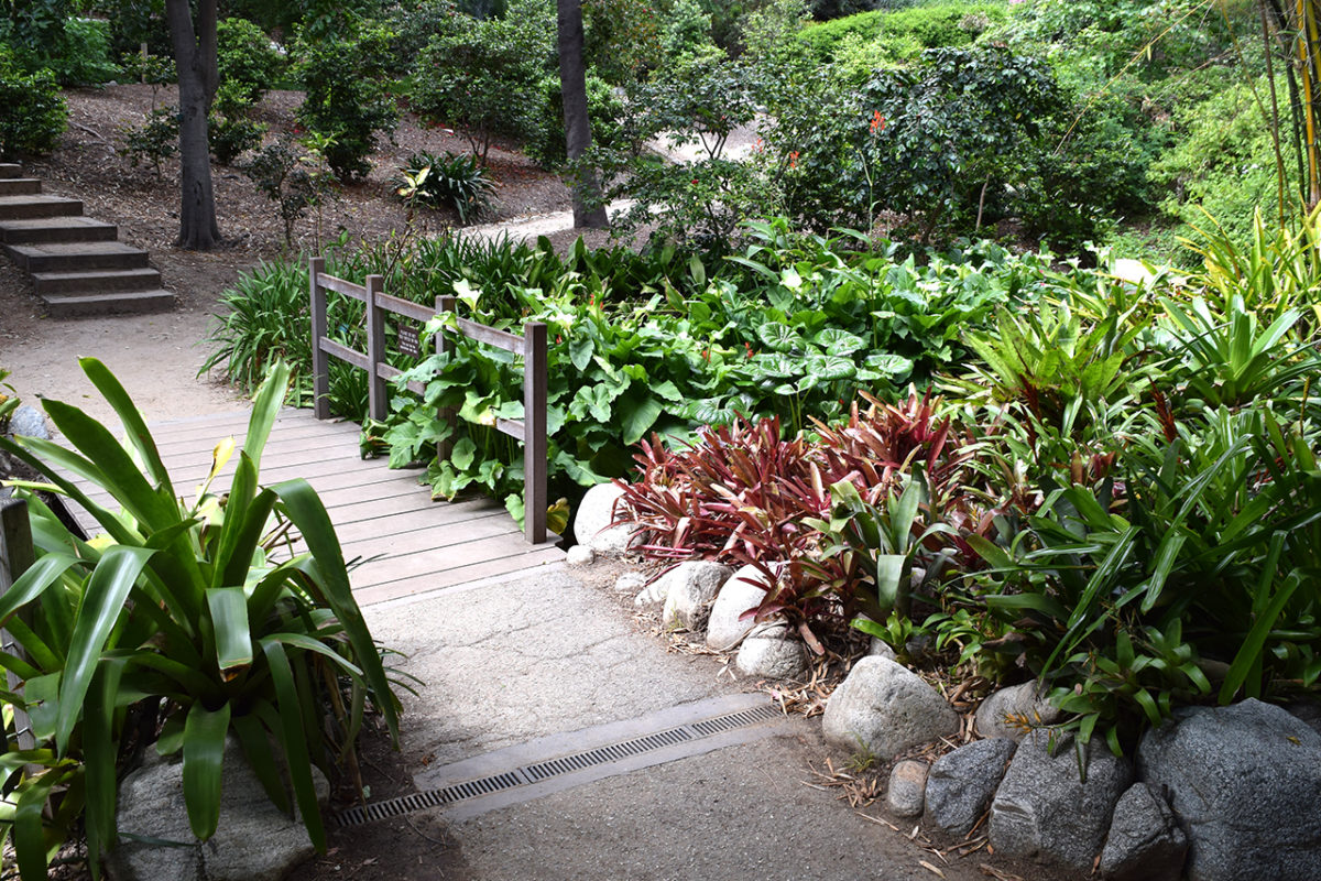 bridge over stream at the Mildred E. Mathias Botanical Garden in Los Angeles, California