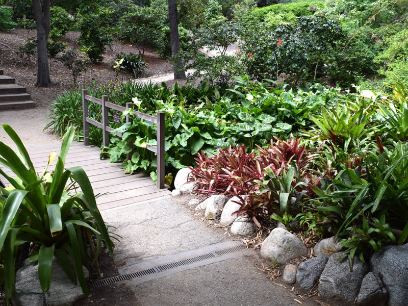 bridge over stream at the Mildred E. Mathias Botanical Garden in Los Angeles, California
