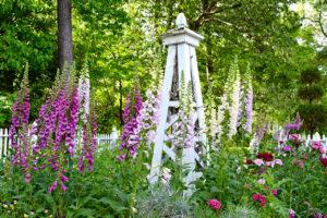 foxglove flowers at Norfolk Botanical Garden in Norfolk, Virginia