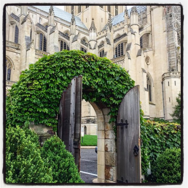 One of my favorite garden entrances at the Bishop's Garden at the Washington National Cathedral, a gorgeous ivy-covered limestone archway. . . . . . #gradinggardens #gardenreview #gardenblog #garden #gardengate #washingtonnationalcathedral #gardenDC #bishopsgarden #publicgarden #gardentourism #gardentour #washingtonDC