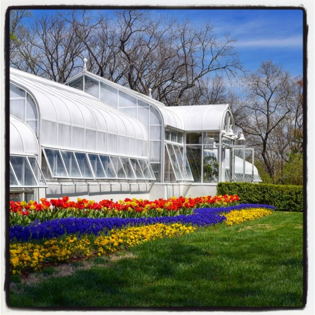 celebrating #NationalPublicGardensWeek by sharing some personal favorite gardens. The greenhouse at Hillwood Estate, Museum, & Gardens @hillwoodmuseum in Washington D.C. is as beautiful from the outside as the treasures hidden within. This is a working greenhouse that is also open to the public. (The garden is currently closed but you can visit virtually for now!)⠀⠀⠀⠀⠀⠀⠀⠀⠀ .⠀⠀⠀⠀⠀⠀⠀⠀⠀ .⠀⠀⠀⠀⠀⠀⠀⠀⠀ .⠀⠀⠀⠀⠀⠀⠀⠀⠀ .⠀⠀⠀⠀⠀⠀⠀⠀⠀ .⠀⠀⠀⠀⠀⠀⠀⠀⠀ #garden #gardenblog #gardens #flowers #flowerphotography #hillwoodestate #gardenphotography #greenhouse  #DCgardens  #washingtonDC #NPGW2020 #all_gardens #ourgardensyourhome #bordergarden #tulips #pansies